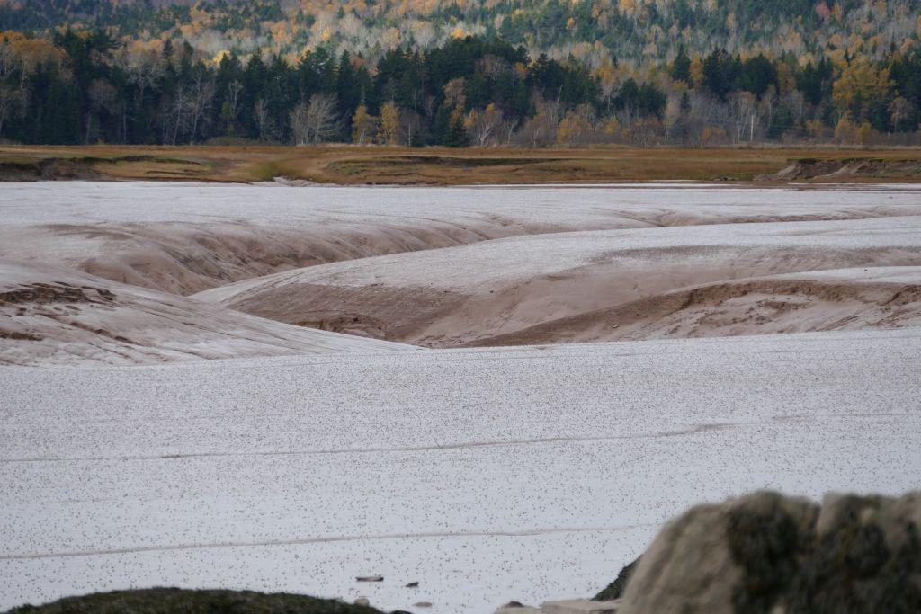 Sandstrand durch Gezeiten geformt