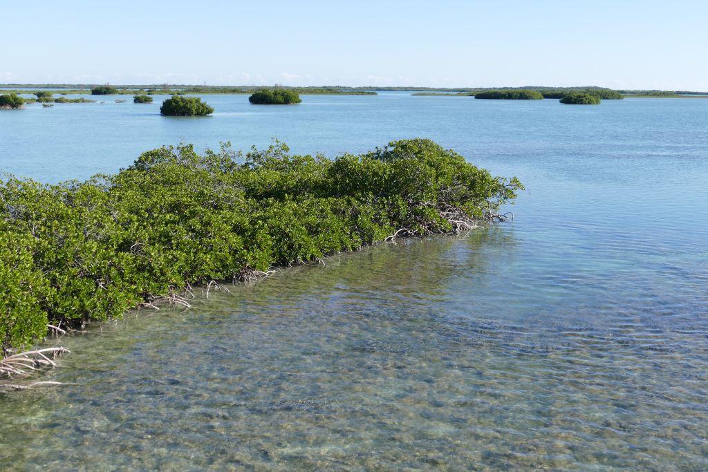 Mangroven 3