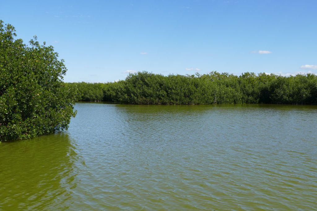 Mangroven 4