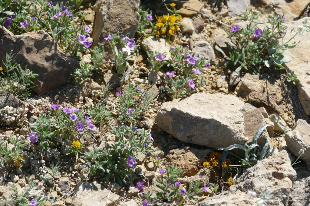 Blume 2 in Wüste.jpg