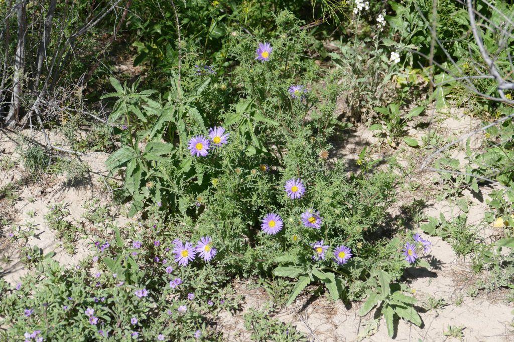Blume 3 in Wüste.jpg