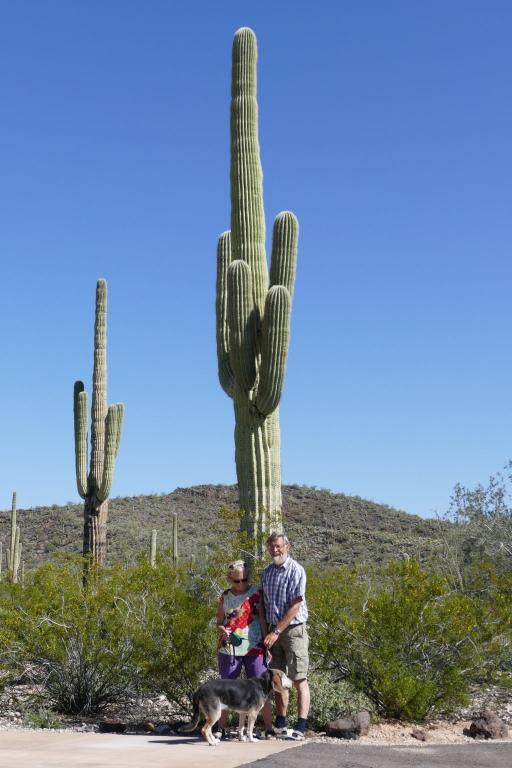 Saguaro 6.jpg