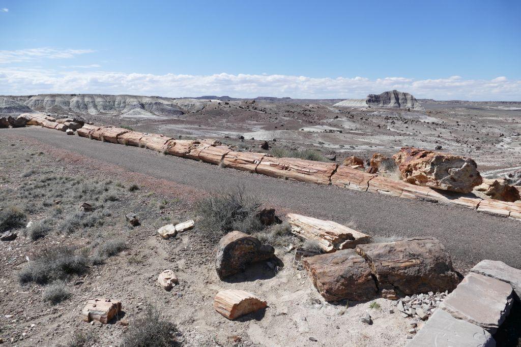 Versteinertes Holz 1.jpg