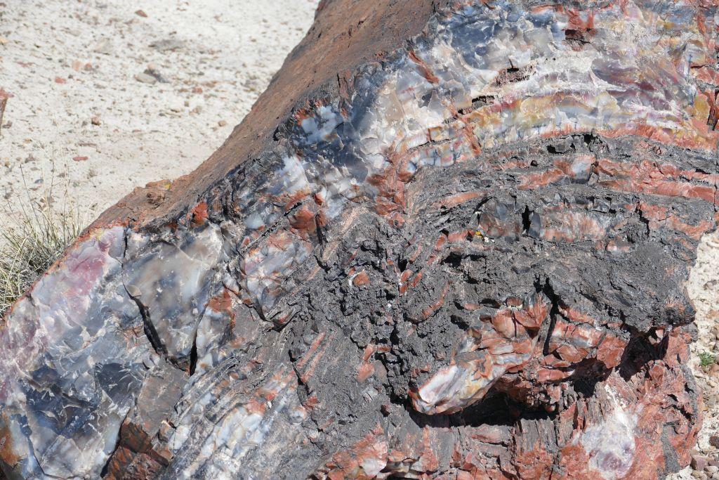 Versteinertes Holz 5.jpg