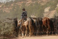 Cowboy 1.jpg