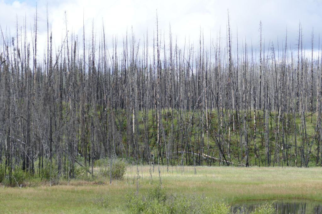 Waldbrand 1