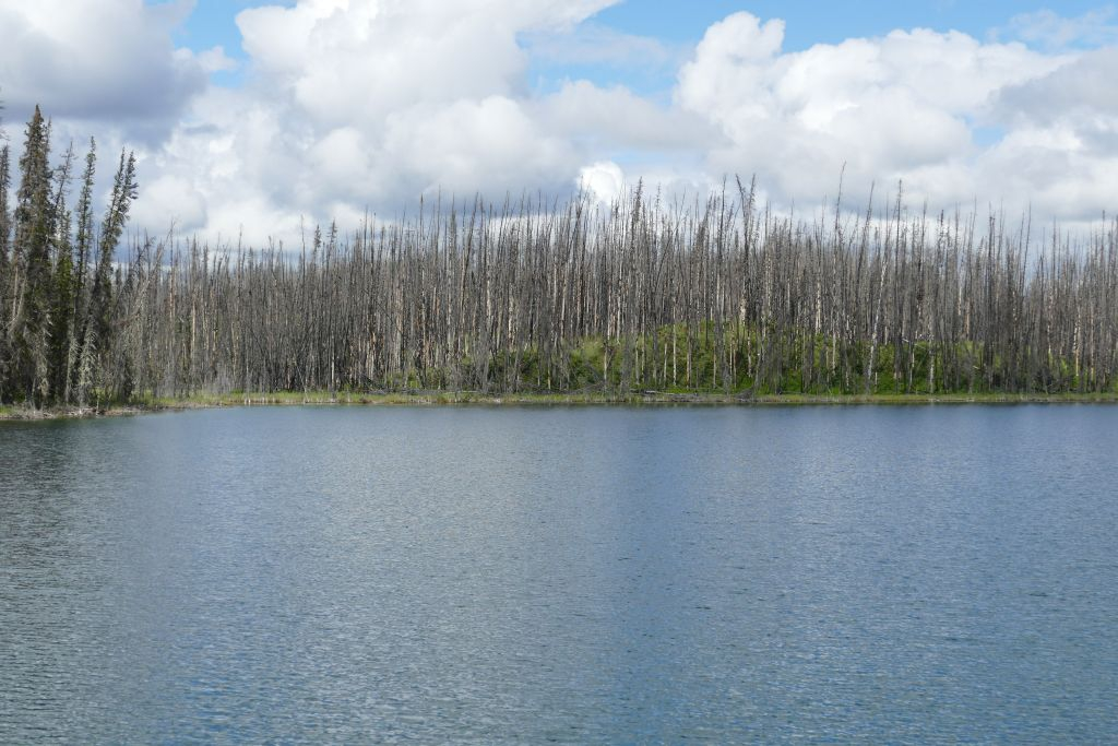 Waldbrand 3