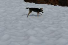 Larissa im Schnee 2