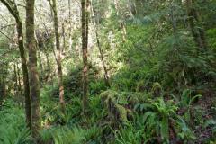 Regenwald auf Vancouver Island 1