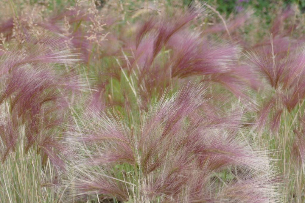 Blumen am Pistenrand 1