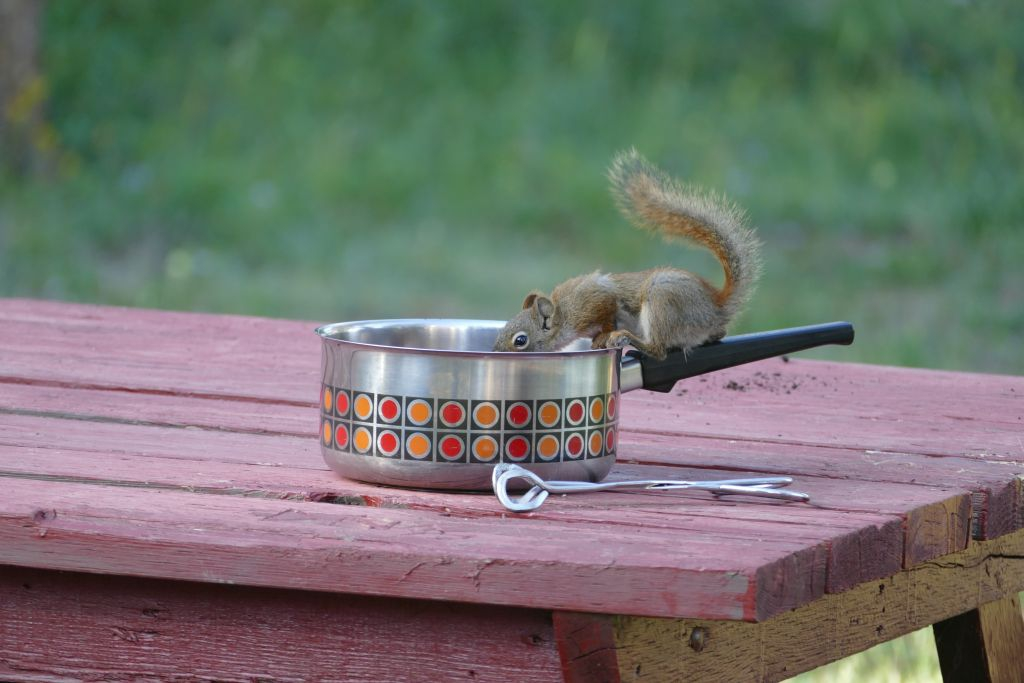 Squirrel an Teepfanne 3
