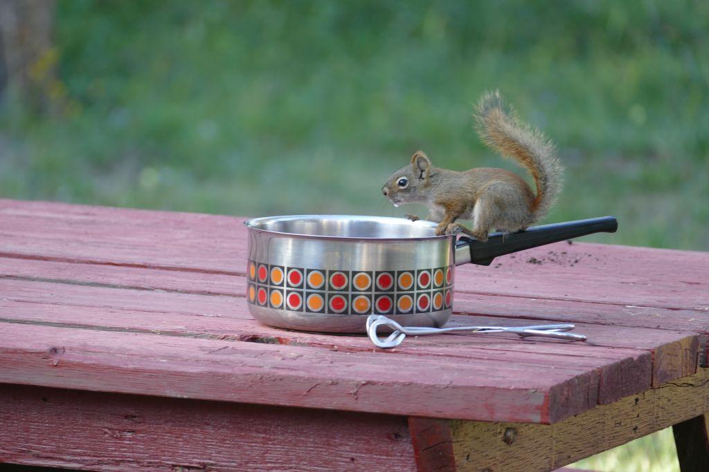 Squirrel an Teepfanne 4