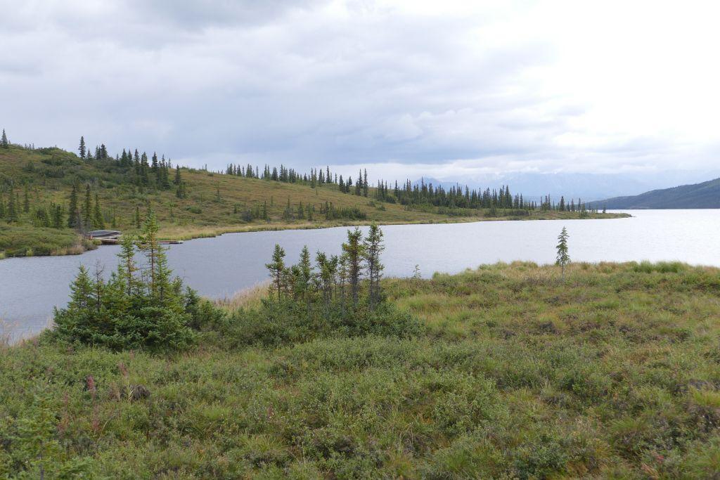 Denali Landschaft 10