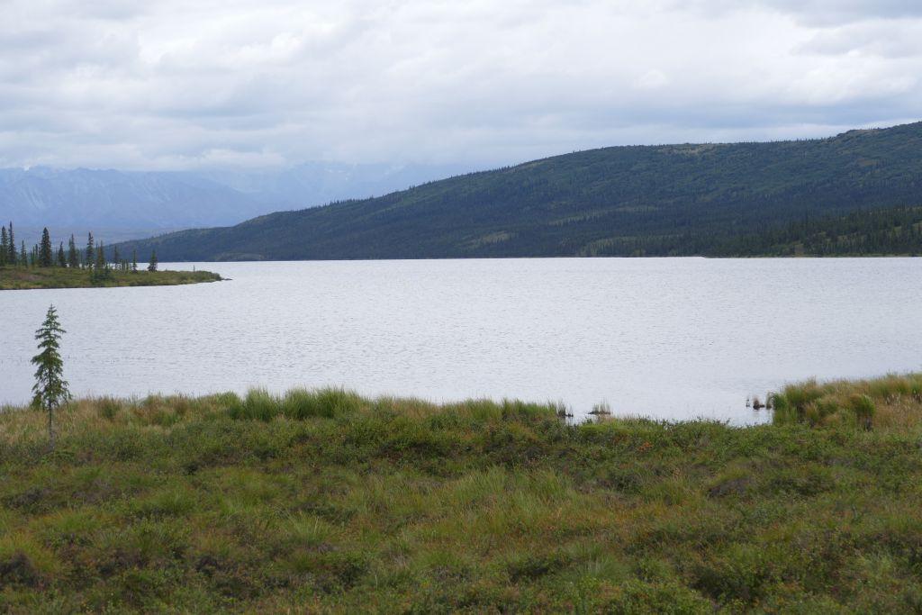 Denali Landschaft 7