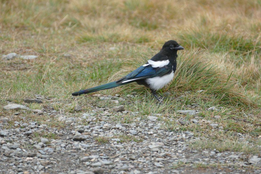 Hatcher Pass - Vogelweltjpg