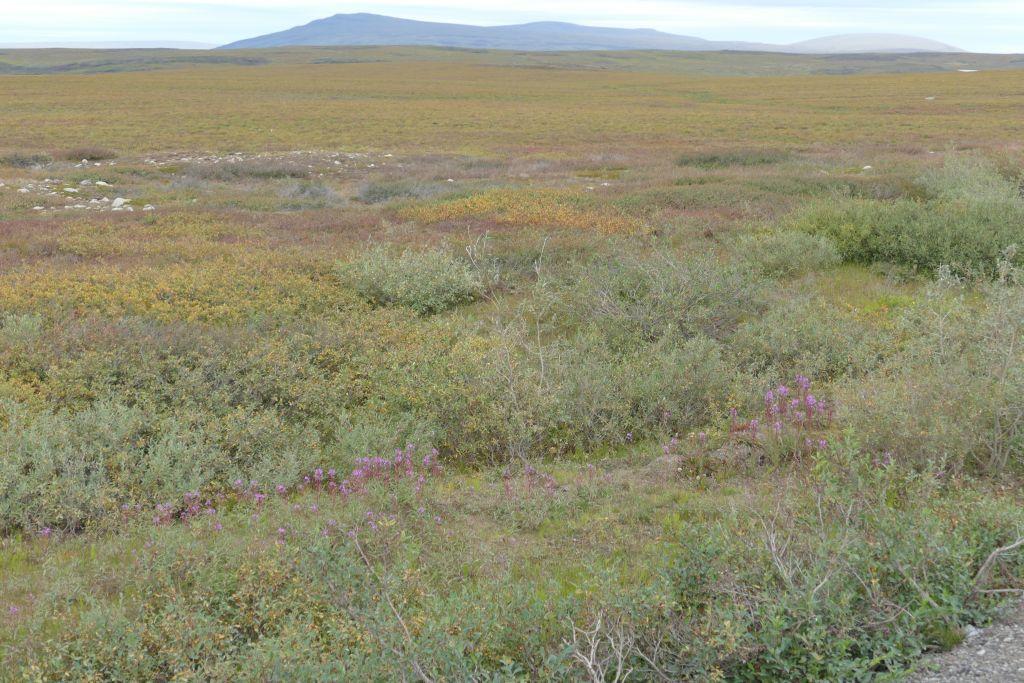 Tundra 1