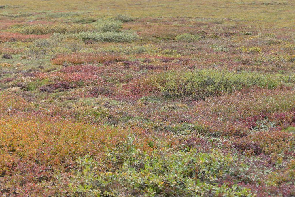Tundra 3