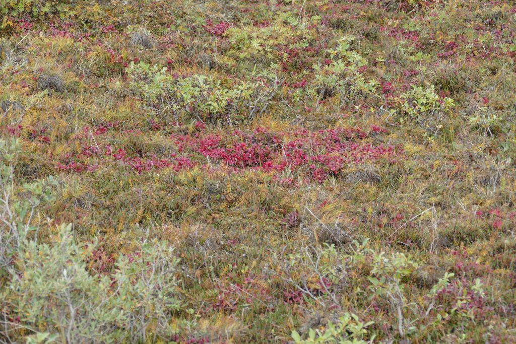 Tundra 6