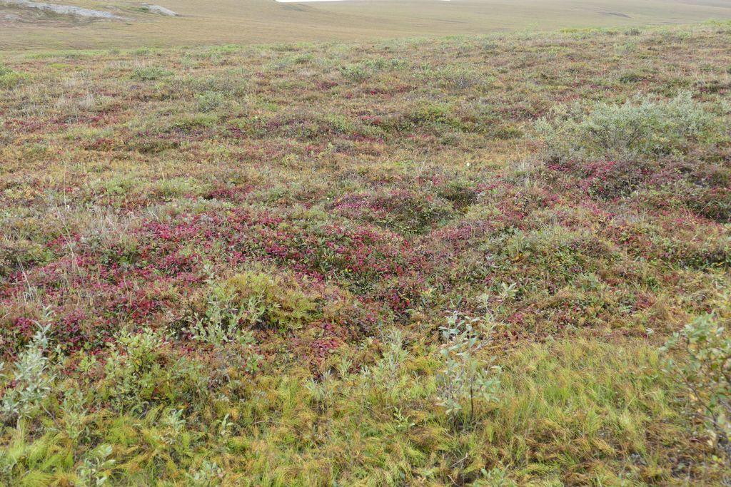 Tundra 7