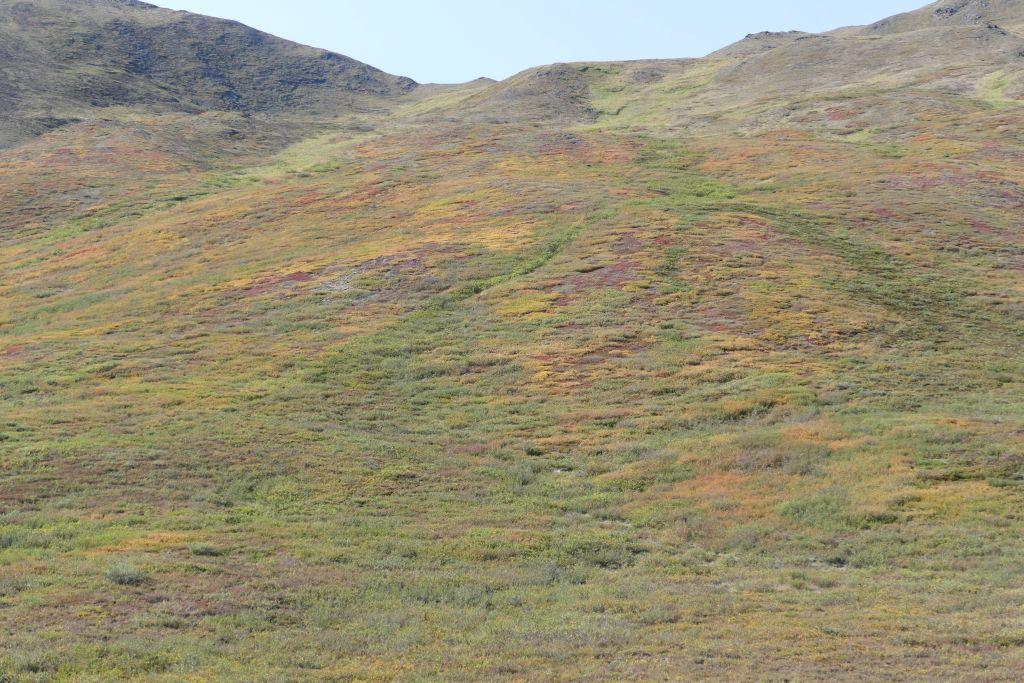 Tundra 9