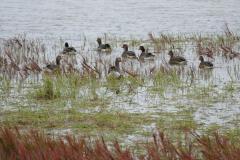 Deadhorse Wasservögel 1