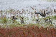 Deadhorse Wasservögel 2
