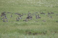 Deadhorse Wasservögel 3