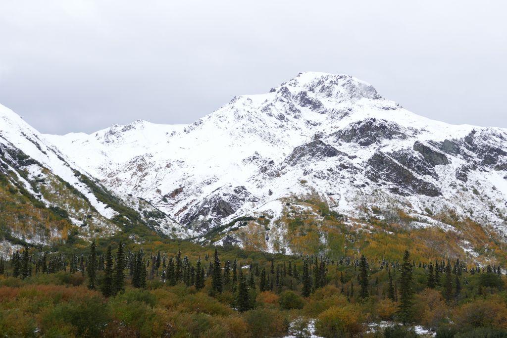 Herbstwald mit Schneeberge 3