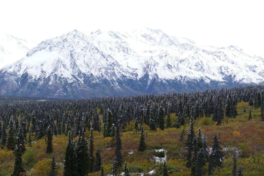 Herbstwald mit Schneeberge 4