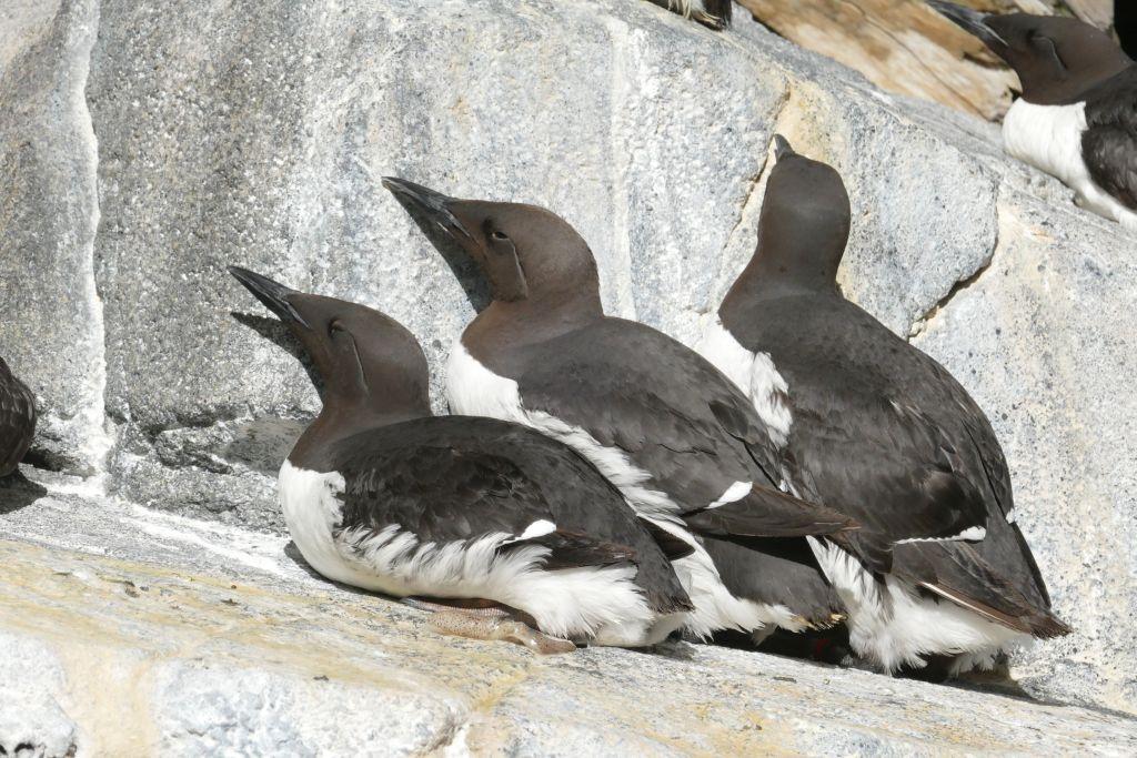 Seward Vögel
