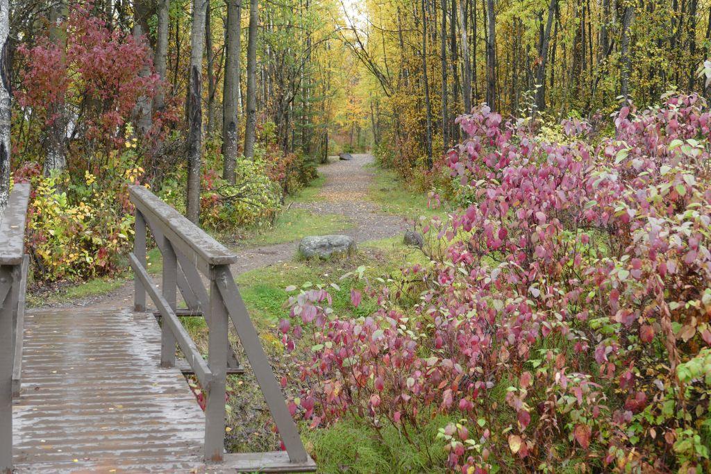 Cassiar im Herbst 5