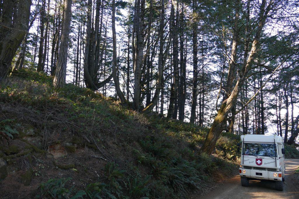 Einsame Waldpiste 5