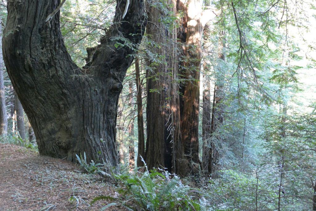 Einsame Waldpiste 7