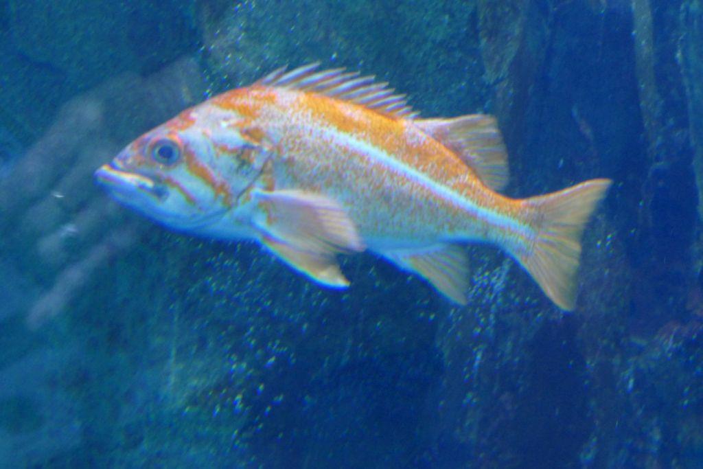 Fische im Aquarium 2