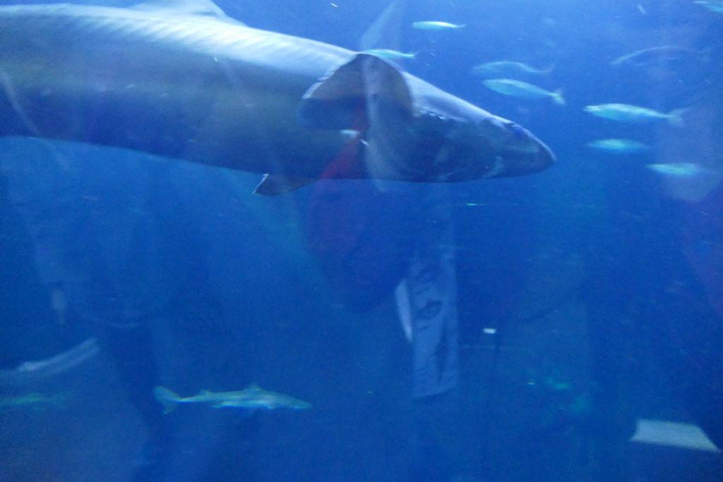 Fische im Aquarium 4