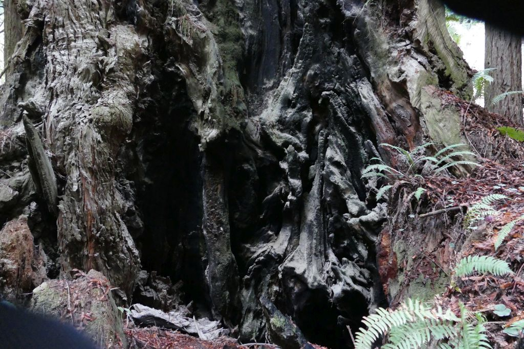 Redwood 4