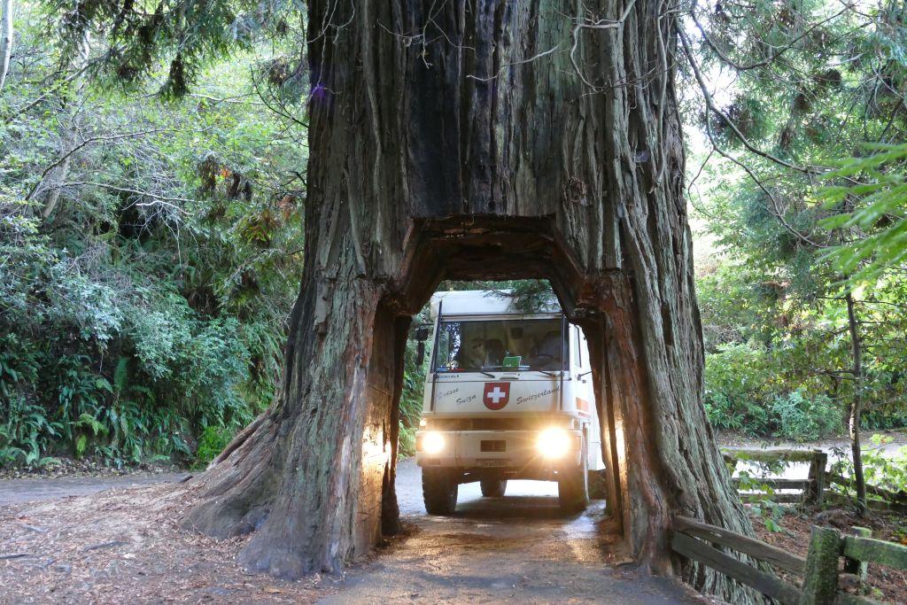 Redwood für uns zu klein