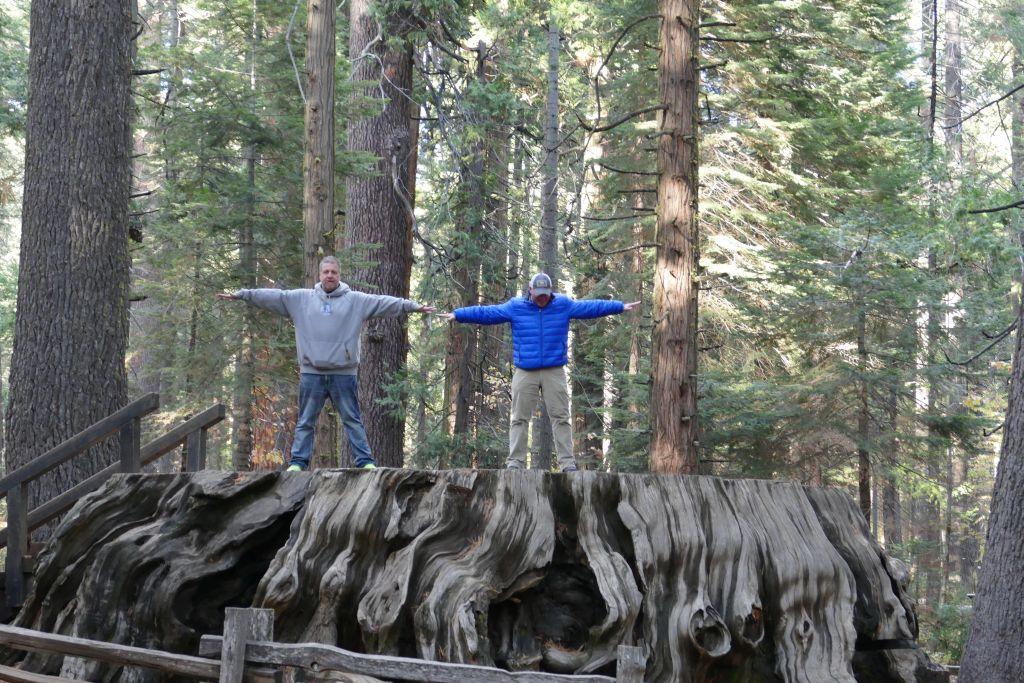 Sequoia Bäume 5