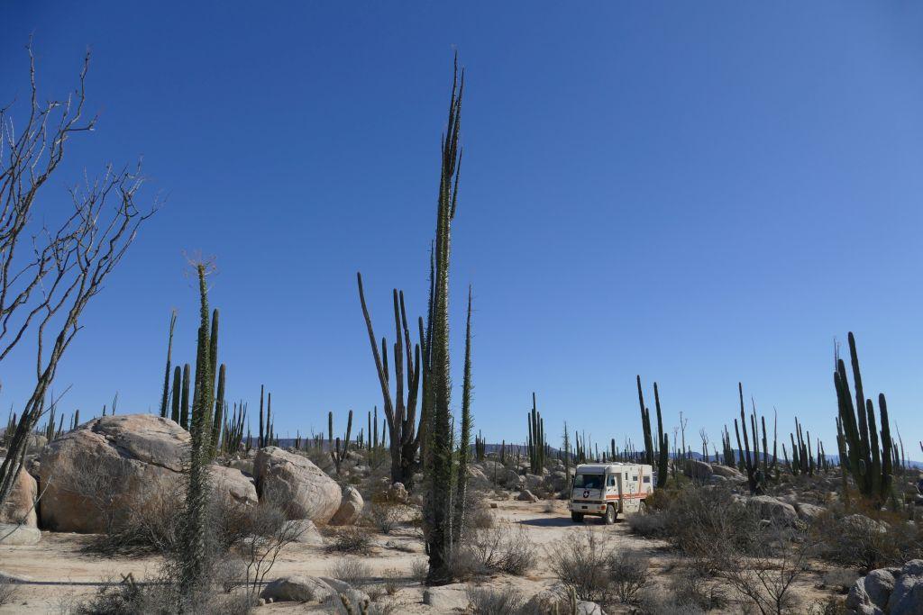 Kaktus Landschaft Übernachtungsplatz