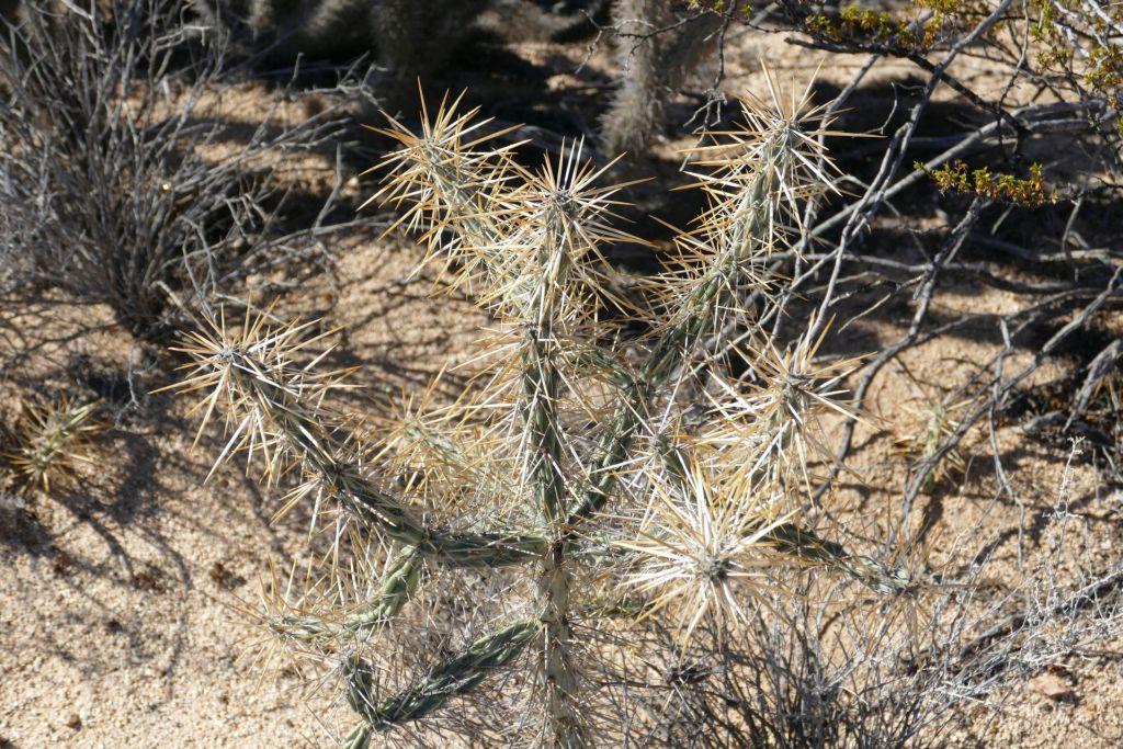 Kaktus Landschaft stacheliges Ungeheuer