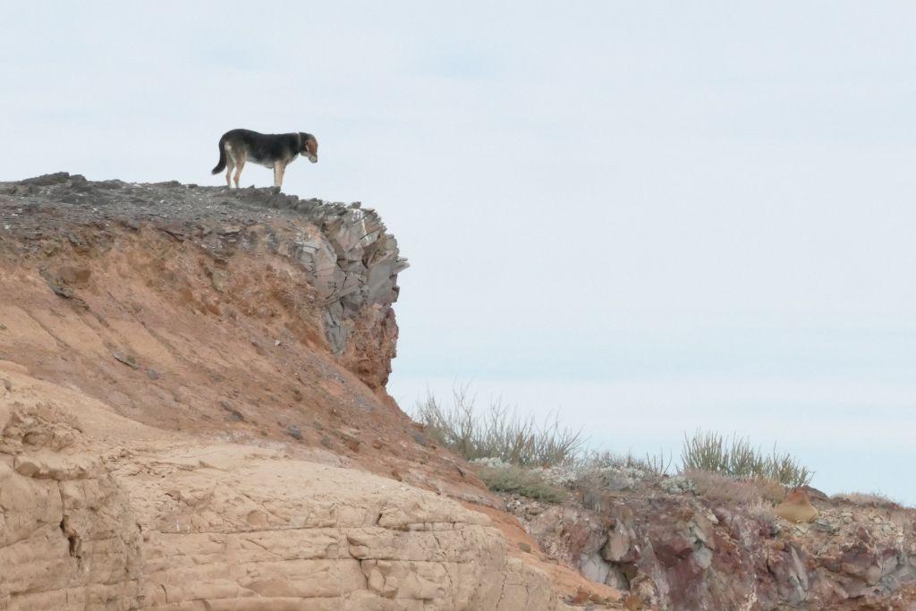 Wachhund Larissa auf dem Felsvorsprung