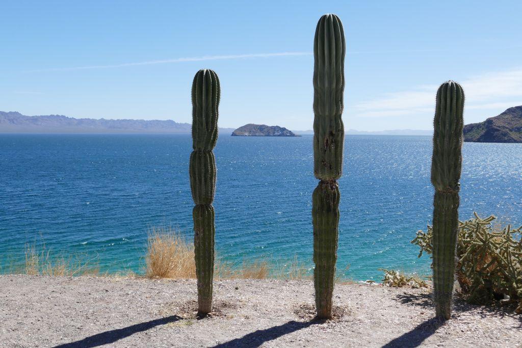 Der Baja California entlang