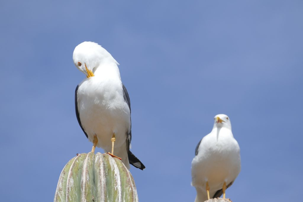 Wasservögel 2