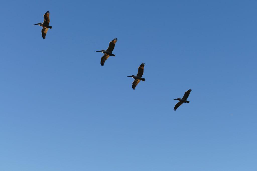 Wasservögel 7