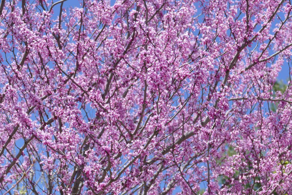 Frühlingsbeginn 4