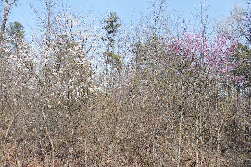 Frühlingsbeginn 1