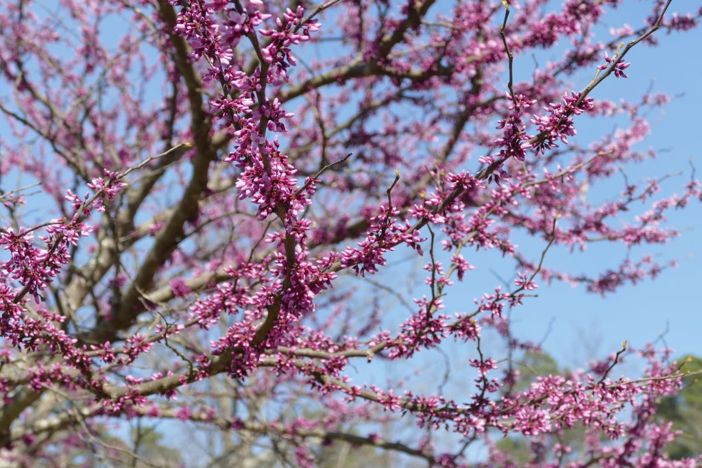 Frühlingsbeginn 3