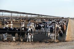 Rinderhaltung 2
