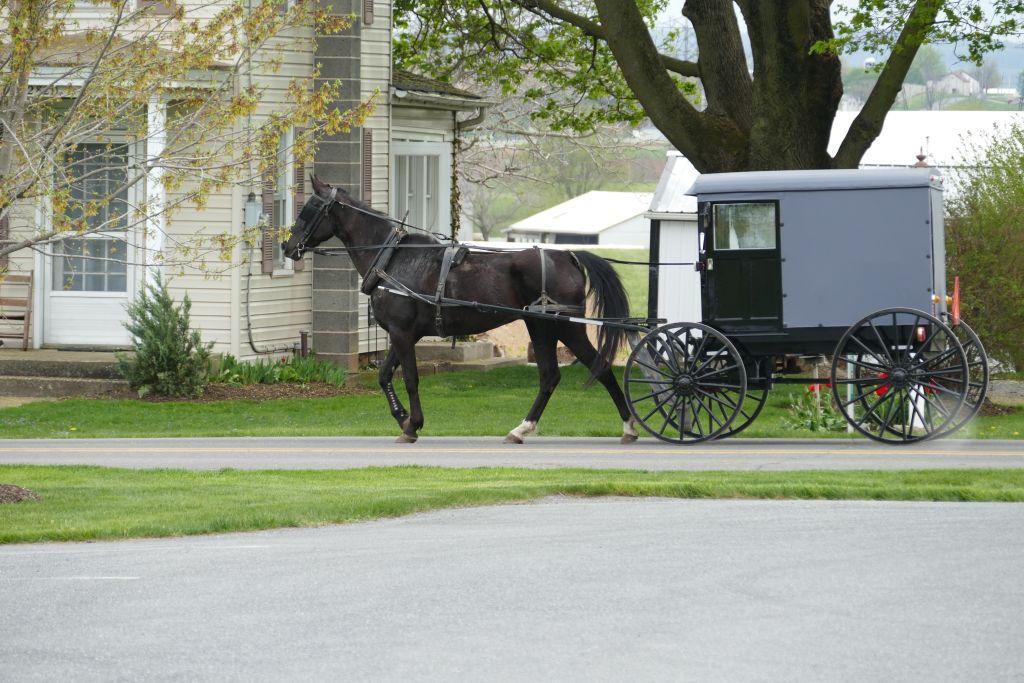 Amish Kutsche 1