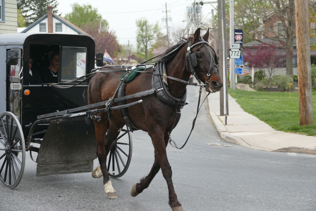 Amish Kutsche 2